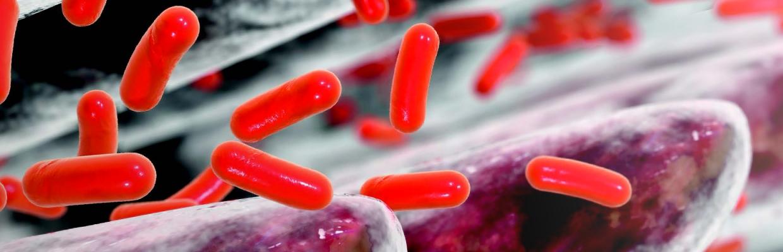 Atlas Immunologie : Tout sur le système immunitaire, en fiches et en images.
