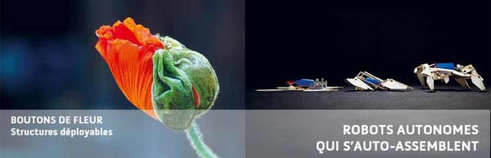 image-biomimetisme-fleure.jpg