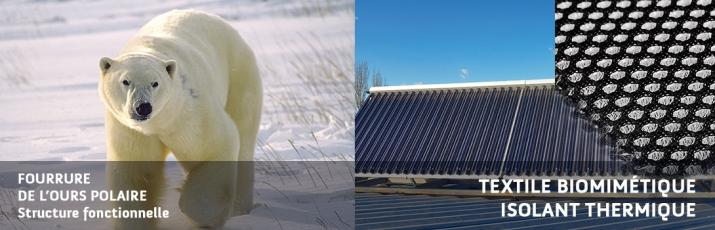 biomimetisme-Ours et couverture thermique